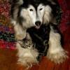 The Dope on Doggy Do-Do: