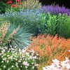 Create a Carefree and Beautiful Garden with Xeriscaping!