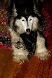 Shylo & Rosie