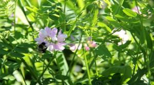 Bees_WWC_WP